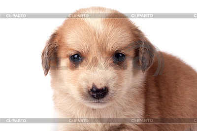 Little cute dog | High resolution stock photo |ID 3017495