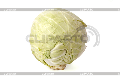 Head of cabbage   High resolution stock photo  ID 3017513