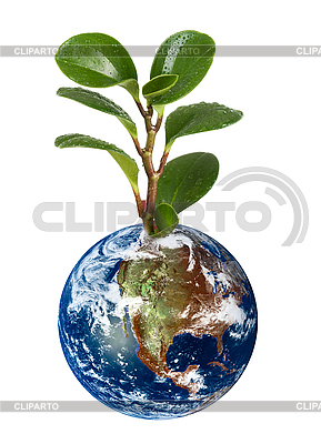 Earth planet with plant | High resolution stock photo |ID 3018793