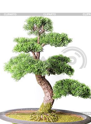 bonsai baum foto mit hoher aufl sung cliparto. Black Bedroom Furniture Sets. Home Design Ideas