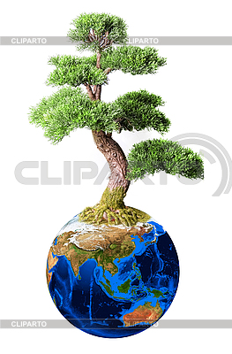 Bonsai on globe | High resolution stock photo |ID 3019686