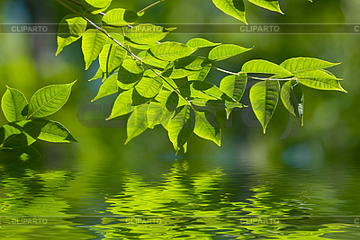 Grüne Blätter im Wasser | Foto mit hoher Auflösung |ID 3027514