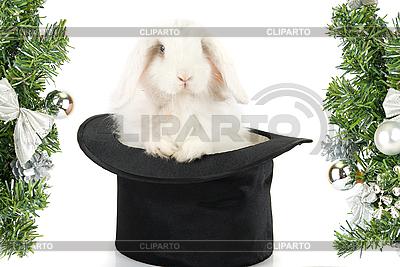 Kaninchen im schwarzen Hut | Foto mit hoher Auflösung |ID 3028460