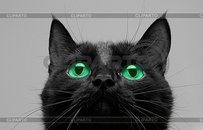 Black cat look up   High resolution stock photo  ID 3029461