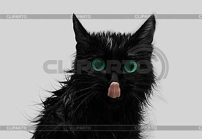 Lustige schwarze Katze | Foto mit hoher Auflösung |ID 3029462