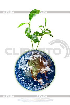 Baby plant growing from the earth | High resolution stock photo |ID 3029758