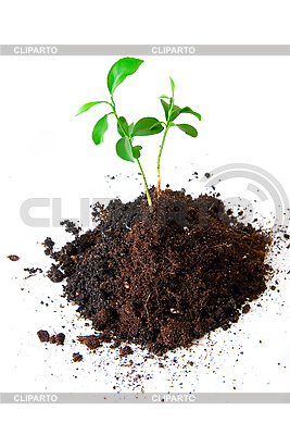 Sprout in soil | High resolution stock photo |ID 3029776