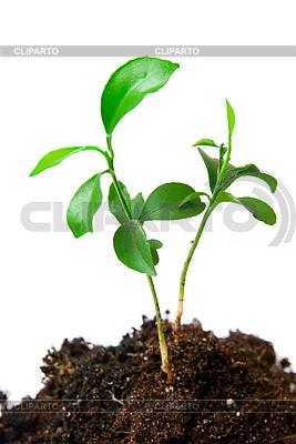 Растение в почве | Фото большого размера |ID 3029777