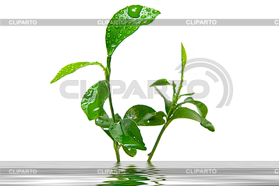 Young green plant | High resolution stock photo |ID 3029780