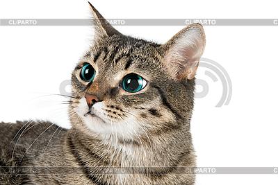 Kot | Foto stockowe wysokiej rozdzielczości |ID 3030094
