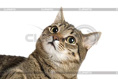 Cat portrait    High resolution stock photo  ID 3030095