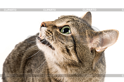 Angry cat  | High resolution stock photo |ID 3030097