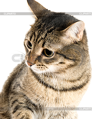 Retrato de gato | Foto de alta resolución |ID 3030099