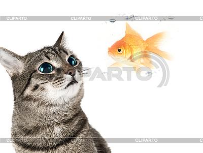 Katze und Goldfisch | Foto mit hoher Auflösung |ID 3030532