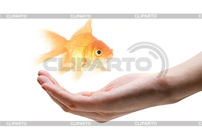 Dbać o ryby | Foto stockowe wysokiej rozdzielczości |ID 3030549