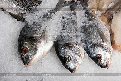 Dorado Fisch | Foto mit hoher Auflösung |ID 3030749