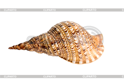 Морская ракушка | Фото большого размера |ID 3030757