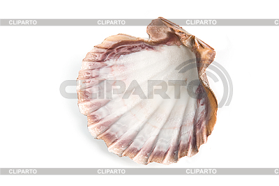 贝壳 | 高分辨率照片 |ID 3030767