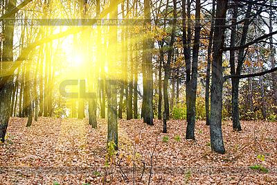 Las jesienią | Foto stockowe wysokiej rozdzielczości |ID 3030906