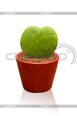 Heart shaped cactus | 高分辨率照片 |ID 3031152