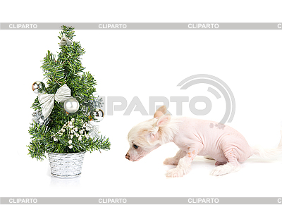 Dog`s new year | High resolution stock photo |ID 3031201