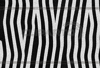 Zebra texture  | High resolution stock illustration |ID 3035523