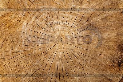 Old wood log  | High resolution stock photo |ID 3019990
