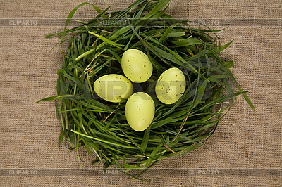 Grass nest with eggs  | High resolution stock photo |ID 3020501