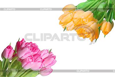 Viele bunte Tulpen | Foto mit hoher Auflösung |ID 3019810