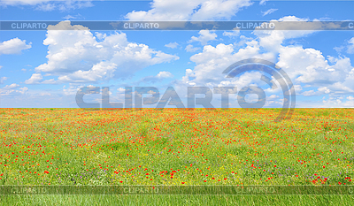 Field of red poppies and perfect blue sky    High resolution stock photo  ID 3019878