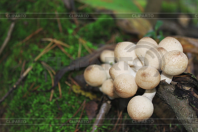 Giftige Pilze | Foto mit hoher Auflösung |ID 3022752