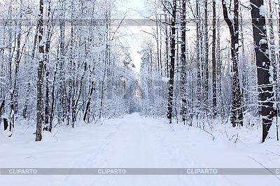 Weg im Winterwald | Foto mit hoher Auflösung |ID 3022824