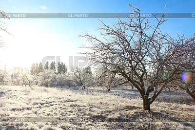 Winter landscape with hoarfrost crystal apple tree | High resolution stock photo |ID 5508270