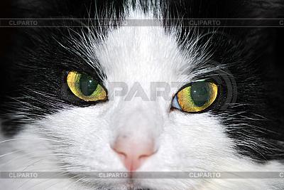 고양이 | 높은 해상도 사진 |ID 3026115