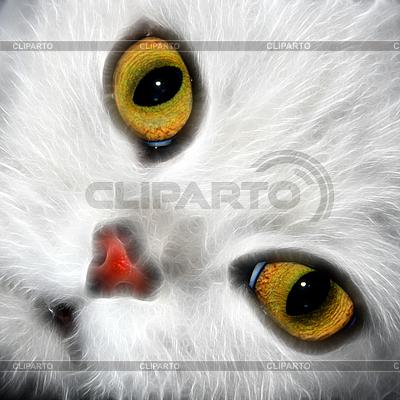 Oczy kota | Foto stockowe wysokiej rozdzielczości |ID 3026637