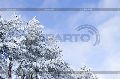 Winter landscape with snowy trees | High resolution stock photo |ID 3284319