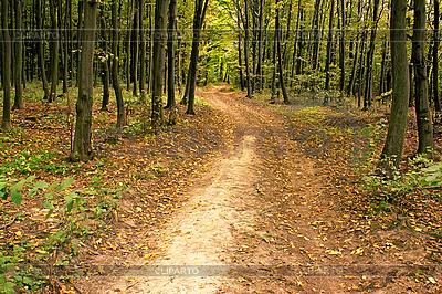 Weg im Hainbuchenwald | Foto mit hoher Auflösung |ID 3037824