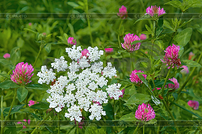 Flowering of motley plants   High resolution stock photo  ID 3038793