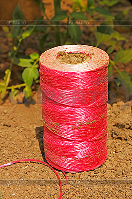 Pink coil on the soil | High resolution stock photo |ID 3038811