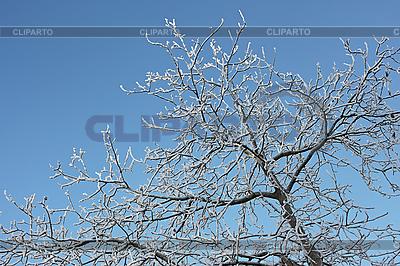 겨울 나무 늦었다 덮여 | 높은 해상도 사진 |ID 3063190