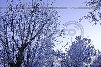 겨울 나무 늦었다 덮여 | 높은 해상도 사진 |ID 3063191