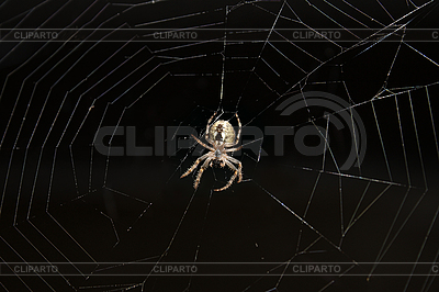 Spider on web | High resolution stock photo |ID 3064834