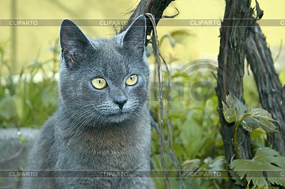 Gray cat outdoors | High resolution stock photo |ID 3064842