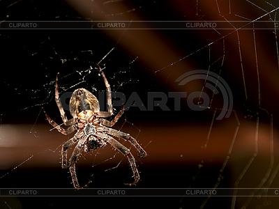 Spider on the web | High resolution stock photo |ID 3065151