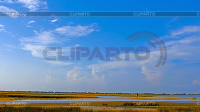 Overgrown salt lake near the sea   High resolution stock photo  ID 3066518