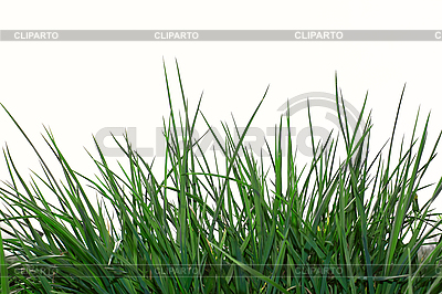 Green grass   High resolution stock photo  ID 3066949