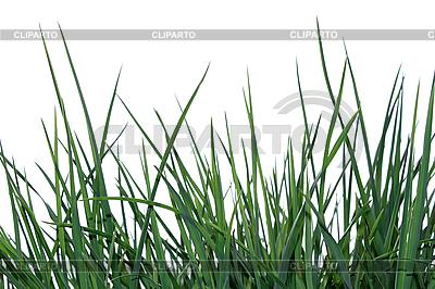 Grünes Gras | Foto mit hoher Auflösung |ID 3066950