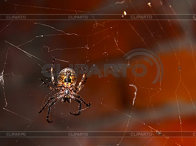 Spider on the web | High resolution stock photo |ID 3068584