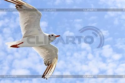Seagulls Flug | Foto mit hoher Auflösung |ID 3375988