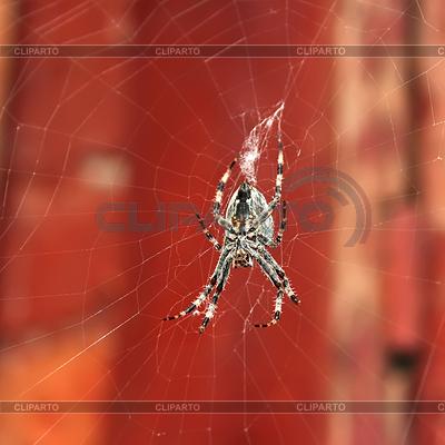 Big spider hanging on web | High resolution stock photo |ID 5287629